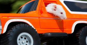 Ratas manejando